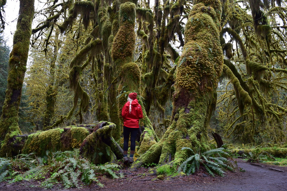 the Hall of Mosses.jpg