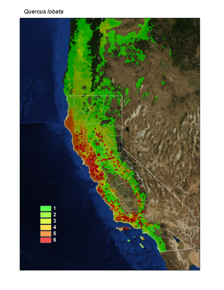We worked with Dr. Healy Hamilton and her lab in the Center for Applied Biodiversity Informatics at the Academy to produce maps of the projected range of Valley Oaks under 2 greenhouse gas emissions scenarios and to identify suitable areas forre-oakingefforts.