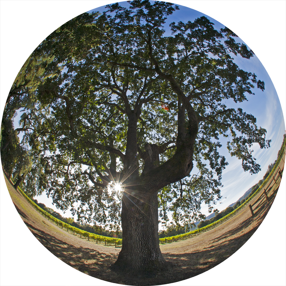 Trees have long symbolized the interconnectedness of all life on Earth.Photo:Tim Horn.