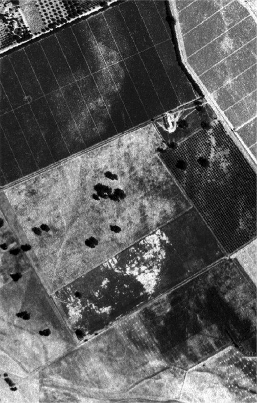We zoom ahead in time and examine a 1942 aerial photograph of a farm in the Napa Valley, noticing a few oaks.