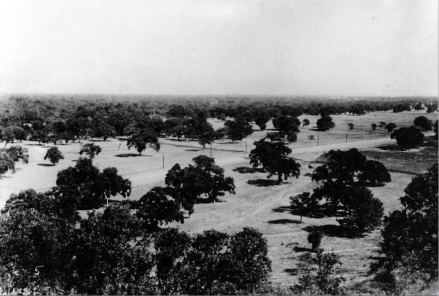 Our goal was to use historic imagery and data toconvey the dominant presence Valley Oaks once had on the landscape and the role they played in the ecosystem.Photo: SFEI.
