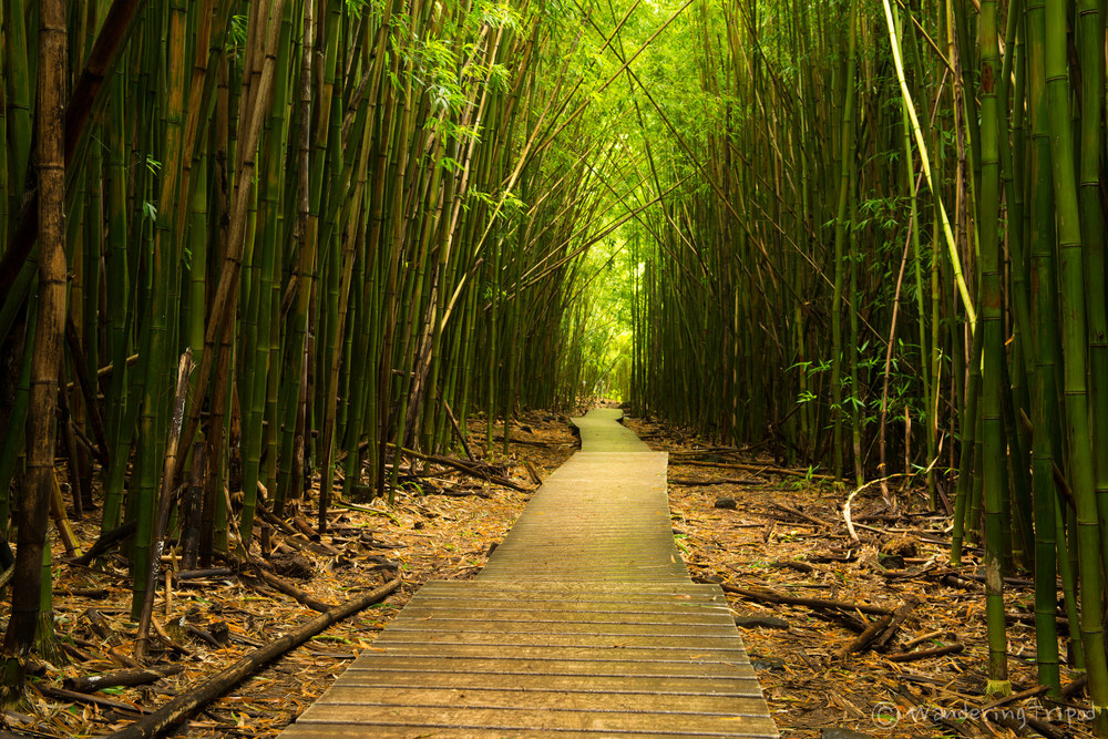 Hike through the bamboo forest...