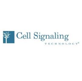 cell signaling.jpg