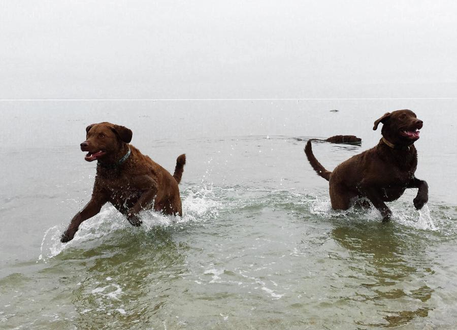 a-dogs-life-1.jpg