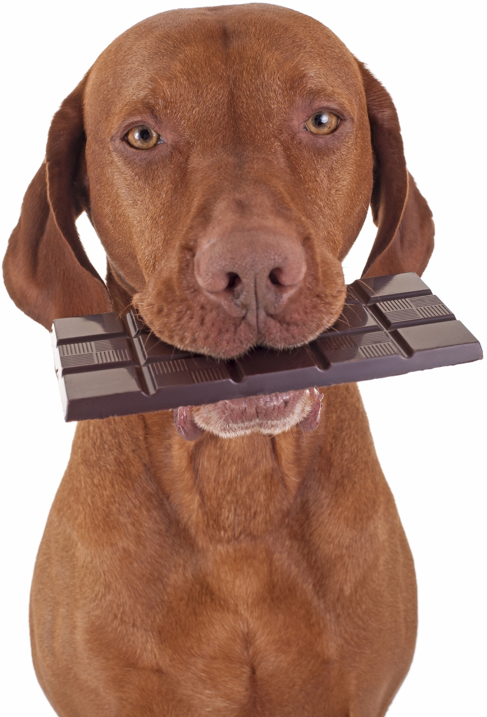 Is Chocolate Bad For Dogs.jpg