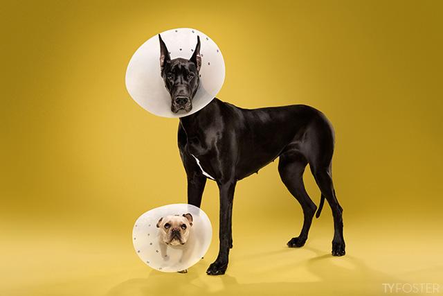 ConeShame4bigdoglittledog.jpg