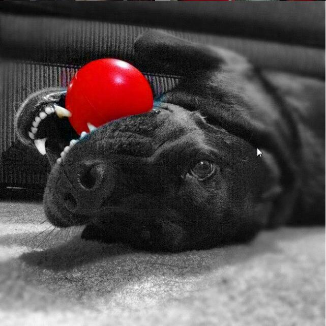 Stress ball, anyone? Photo Cred:IG @mattbourke