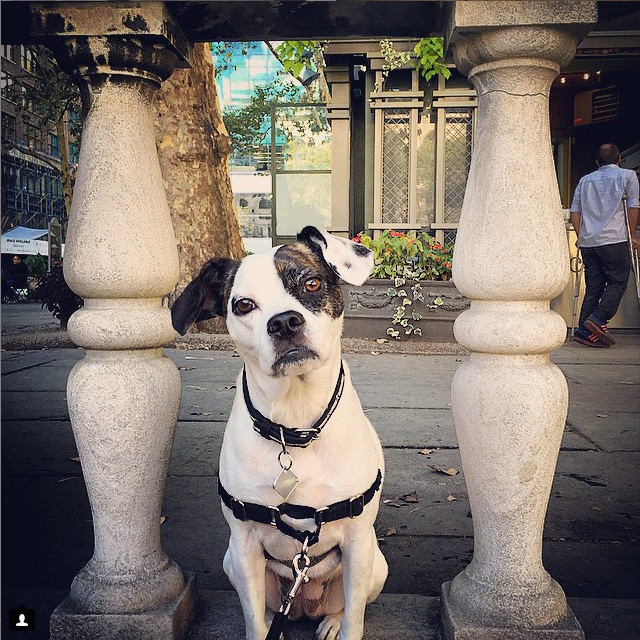 Bryant Park is a beautiful spot to hang out in, especially in the summertime! Photo Credit: IG @TrixieTheFrengle