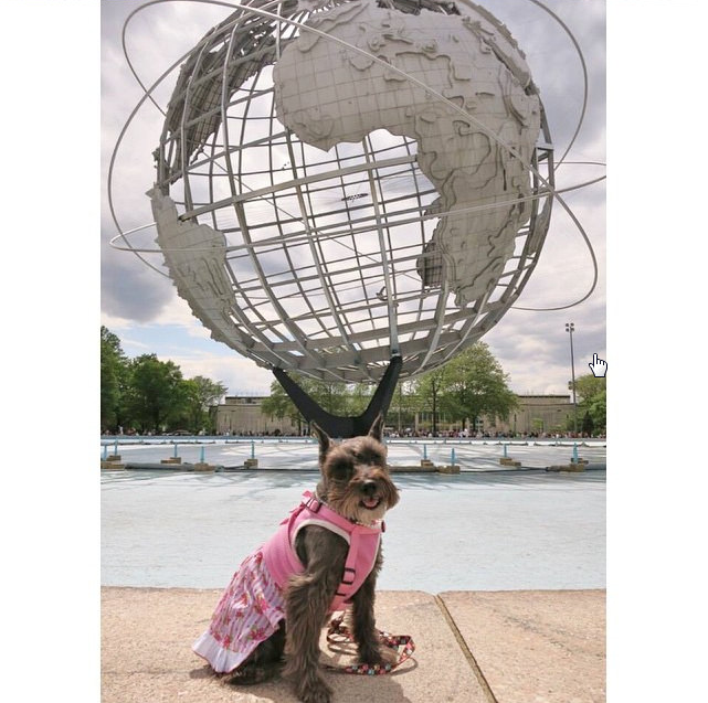 The Unisphere in Flushing Meadow Park is an iconic art piece that remains from the New York World's Fair. Photo Credit: IG @pretty_Lilyschnauzer