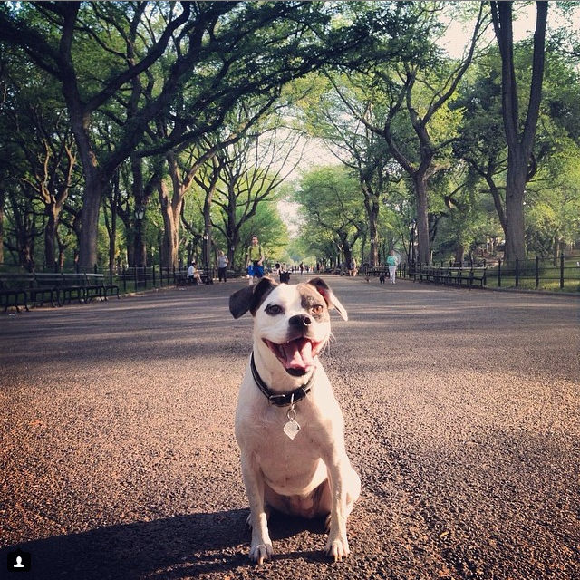 No list like this would be complete without a shot of Central Park. Photo Credit: IG @TrixieTheFrengle
