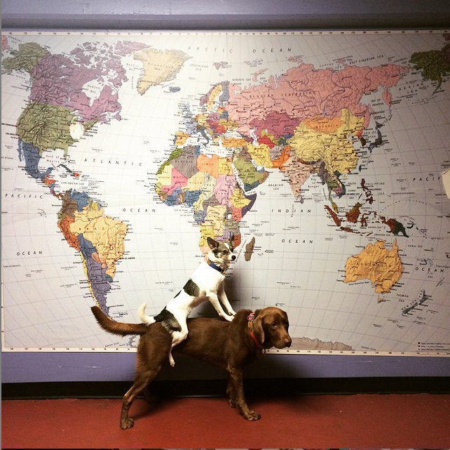 Choosing their next trip! Photo credit: IG @kattieyk