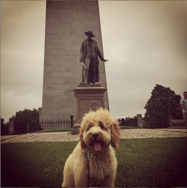 Posing with landmarks is always a fun thing to do when you hit the road-- this pup's in Boston! Photo credit: IG @nutmegwages