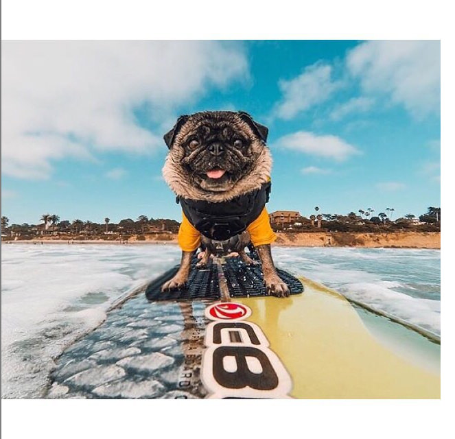 """""""I'm on top of the world on this board!!"""" Photo credit: IG @ripitvids"""