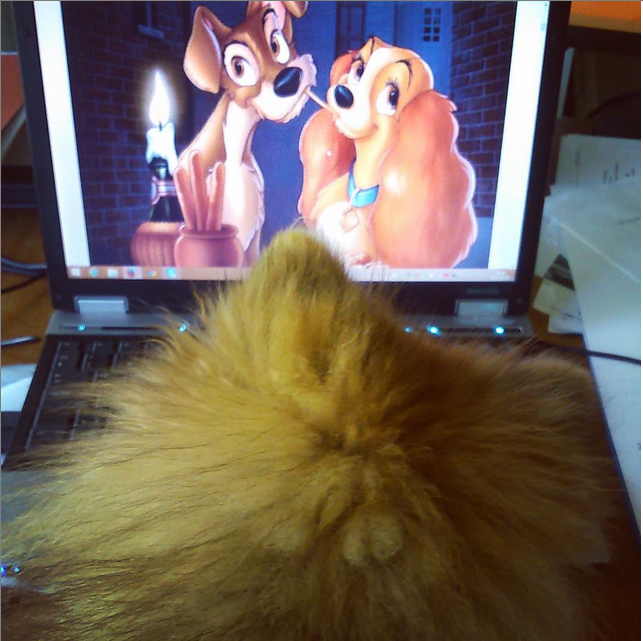 Just watching  Lady and the Tramp ! Photo credit: IG @Phoenixthepom