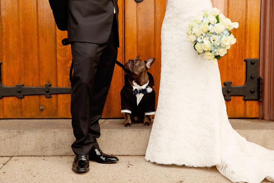 Dog Wedding Tuxedo | Brindles