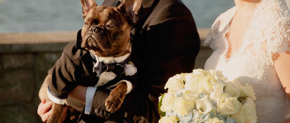 Bespoke Dog Tuxedo Services