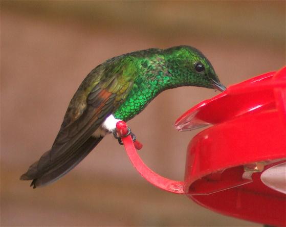 hummingbird-pants
