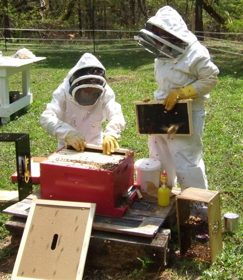 bee-hiving