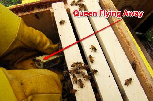bee-queen-escape