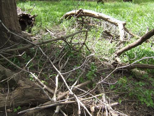 fallen-nest