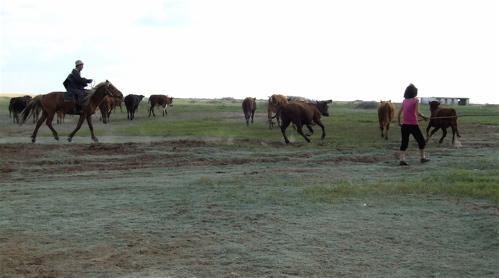 kazakhstan-cattle-drive1