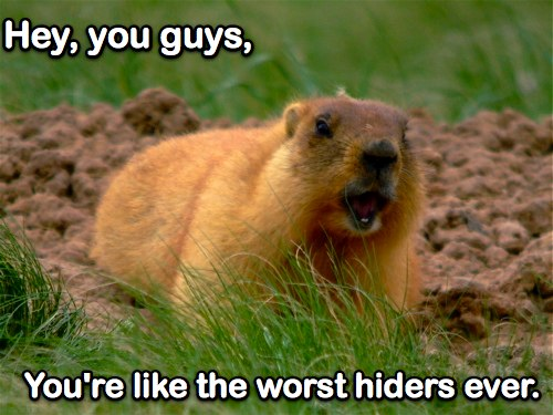 steppe-marmot-1