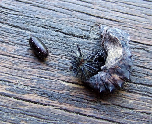 butterfly parasite