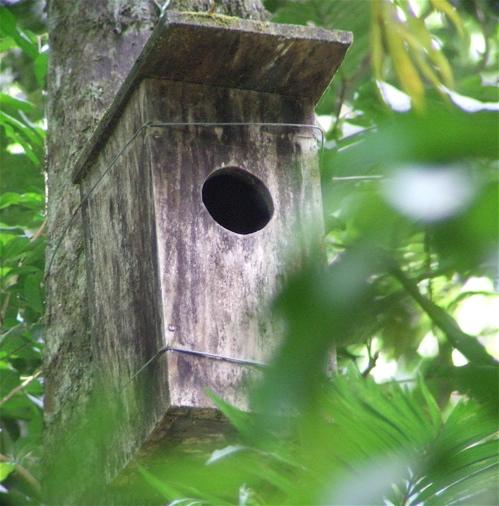 quetzal nest box