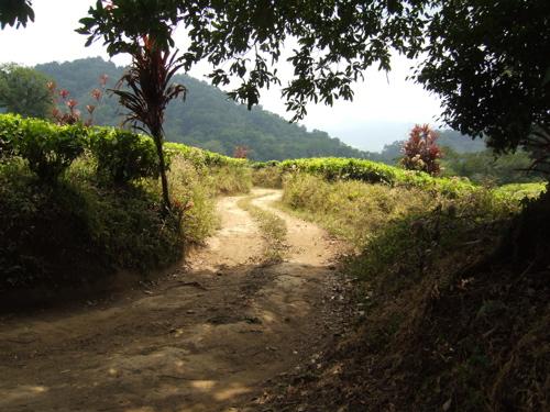 quetzal road