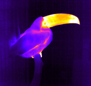 20090724_toucanbeak