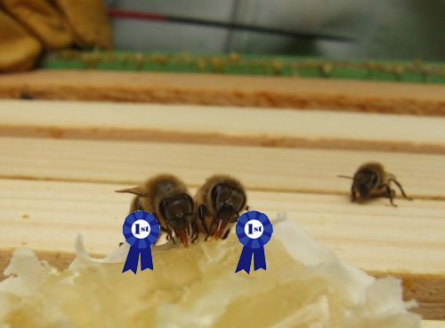 award winning bees