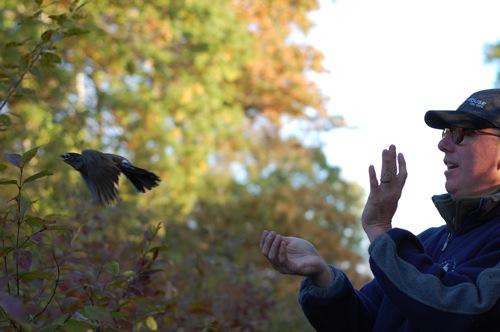 banding robin release
