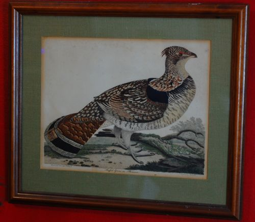 alexander wilson ruffed grouse