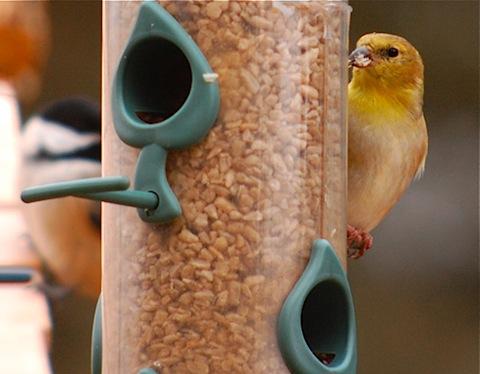 birdfeeding.jpg