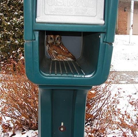 in mailbox.jpg