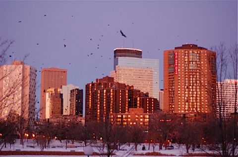 minneapolis crows.jpg