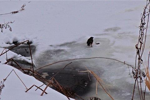 robin fishing.jpg