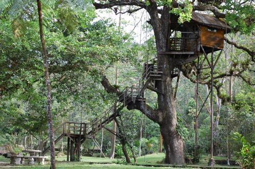 The ... & Birding Around Canopy Lodge In Panama u2014 Birdchick