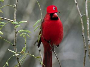 wpid-cardinal-2010-07-7-08-43.png