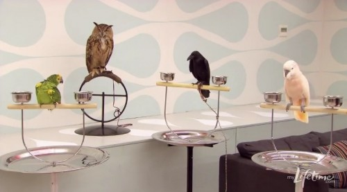 project runway birds