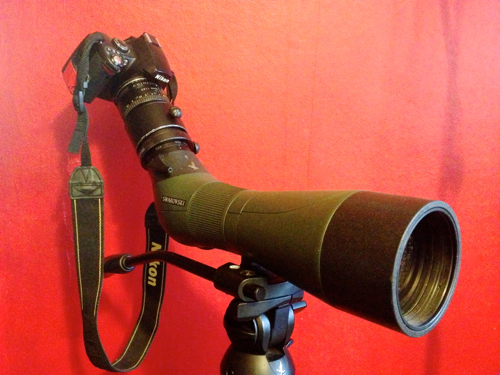 Nikon D40 Swarovski Digiscoping Set up