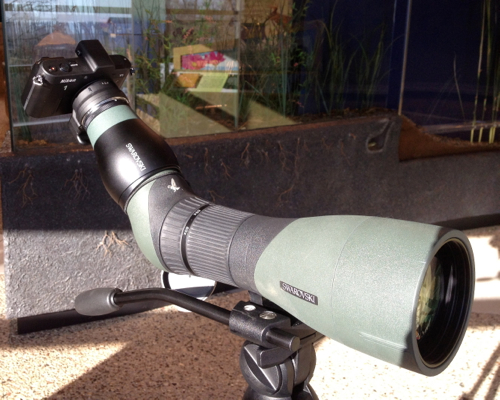 Nikon v1 Swarovski digiscoping set up