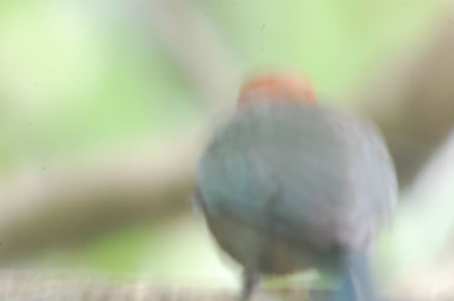 bad bird photo 1