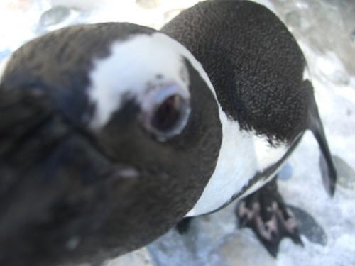 Chelsea McGlynn penguin