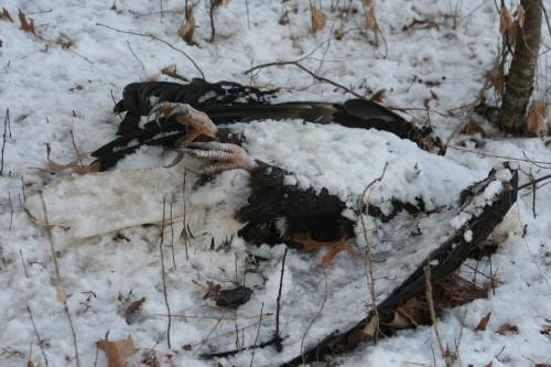 kirk mona dead eagle