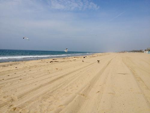 dockweiler beach