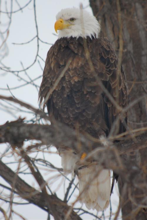 eagle jan 17 2011