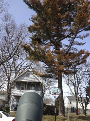 parrot nest tree