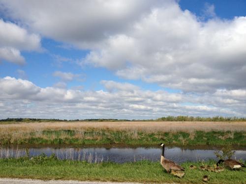 magee marsh