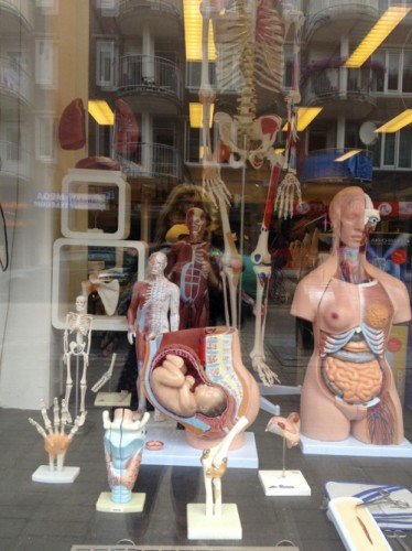 anatomy shop